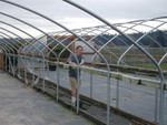 Greenhouse tear down
