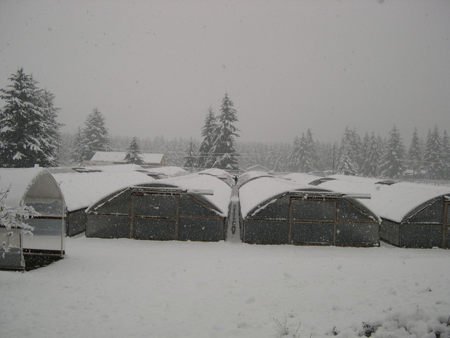 Snow at the nursery (1)