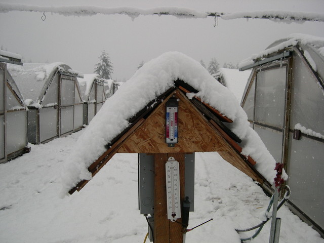 Snow at the nursery 11-2-03 (4