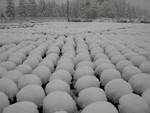 Snow at the nursery 11-2-03 (7