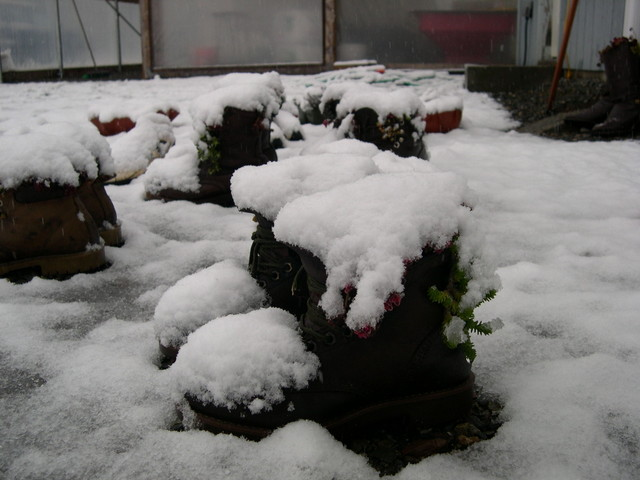 Snow at the nursery 11-20-03 (13