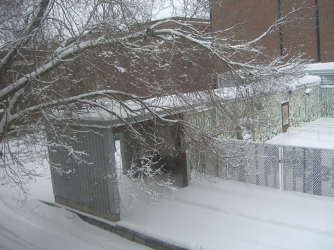 a snow shot.